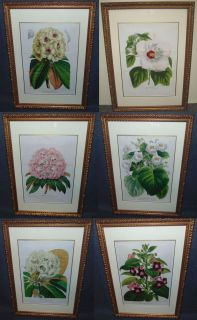 """Set of  6 Framed Botanical Prints Set of  6 Framed and Matted Botanical Prints. Each measures 19-1/2"""" tall x 14"""" wide. Condition is good. No damage. Several Shipping Options Available. Starting Bid $80 for all 6. Auction Estimate $100 - $150."""